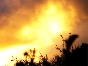 Sunrise Silhouettes: Dainty plants sillhouetted against a spectacular sunrise.