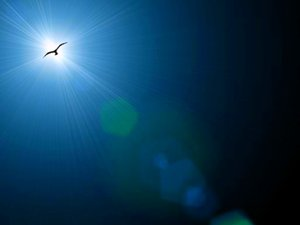 Lensflare 3: Lensflares on plain backgrounds with a flying bird. The bird outline is courtesy of ObsidianDawn.com. I made this series too big, and the filter has pixelated the large image. Probably best used only for the web.