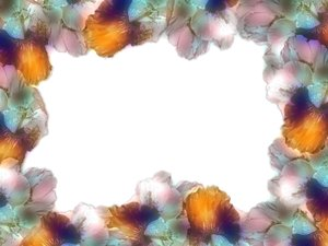 Beautiful Floral Border: Floral border on blank page. Lots of copyspace. Made from a photo I took of cannas.