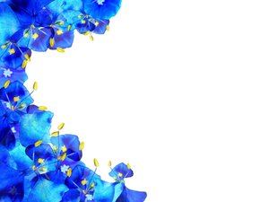 Floral Border 40: A border of blue and yellow flowers on a white ...