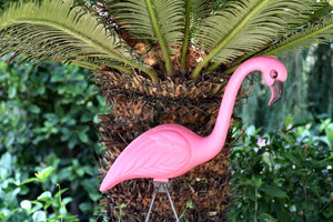 Pink Flamingo