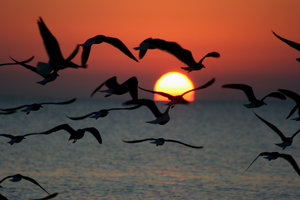 Sunrise with Gulls