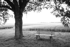 Bench and tree 1