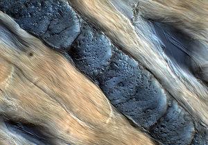 Biological Texture 1