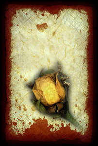 Dead Rose 1: Art made from vintage rose.Please visit my stockxpert gallery:http://www.stockxpert.com ..