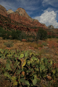 Zion Landscape 2: Landscape of Zion national park
