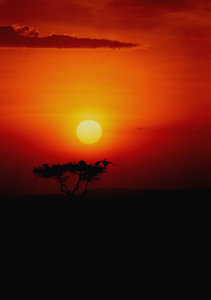 African sunsets