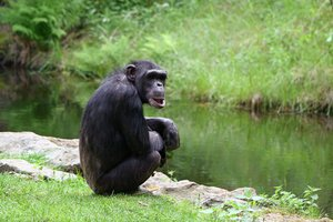 Chimpanzee: Looking forward to feedback! Please credit if possible or drop me a line via http://www.jule.se