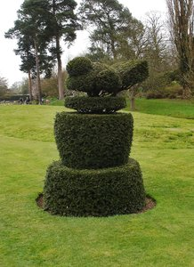 Topiary: Bush shaped into a bird. Topiary