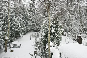 Snow Scene: Gardens after huge snow fall on 2nd Feb 2009. South London, UK.