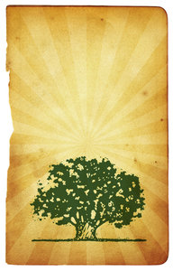Tree Art 2: Variations on a tree graphic.For a HI RES version of this image, please visit: http://www.stockxpert.com ..