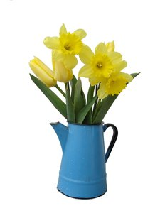 Spring pot: Pot with tulips and daffodils