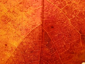 Leaf up close