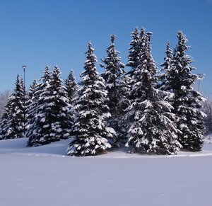 snow covered trees 2