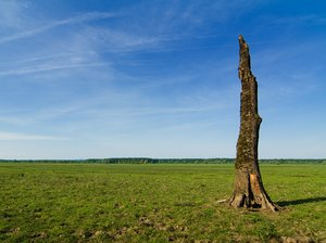Death tree: More picture like this on http://lonjsko-polje.com