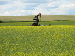 canola fields: Canola field with old buildings and one oil pump jack on it it caught my eye