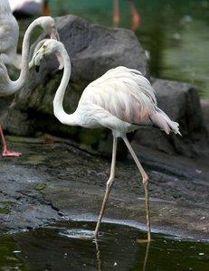 Pretty Bird 1