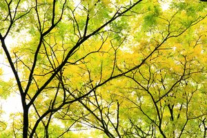 Treescapes 1
