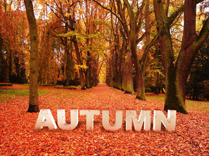 Autumn Concept: Photo of autumn with 3d text to enhance the conceptBackground image credit to Marzena55:http://www.sxc.hu/browse. ..Thanks for the permission to use this image :)