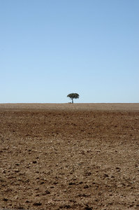 The lonliest tree: A lonely acacia thorn tree in the Karoo, South Africa.NB: Credit to read