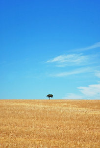 Lonliest Tree II 2: More of the same field and tree I shot before, but now with yellow grass (Red dust before).NB: Credit to read