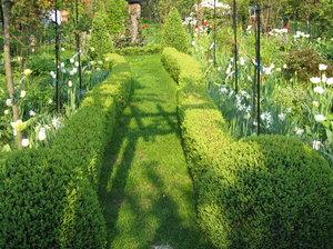 sunny hedgeway