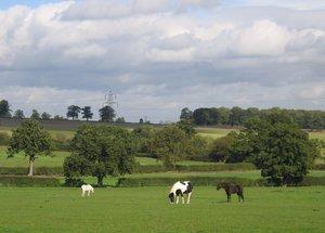 farmland idyll