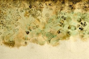 Moldy Art Paper Texture: Art paper that was wet and then molded creating an interesting pattern.