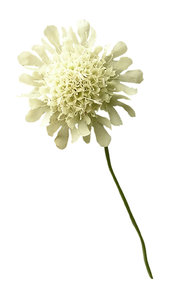 White flower: A white nature flower.