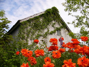 Eye popper: Flowers,shed,sky