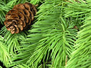 Evergreen 2: Beautiful green all year round!