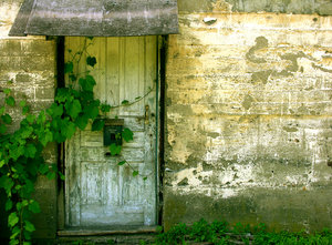 Old House: I love the way the vines are starting to take over the doorway and the texture of the wall.