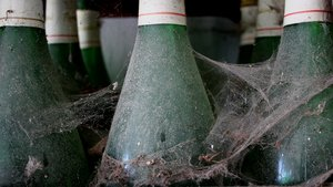 cobwebbed wine bottles