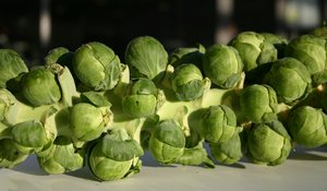 Brussel sprouts 2: Natural lightTaken on October 27 2004 in Copenhagen, Denmark