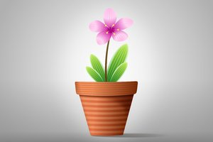 Flowers in Pot: Colorful flowers in a pot on the gray-white background