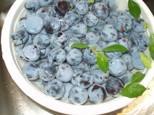 Blueberries: Blueberries in a bowl