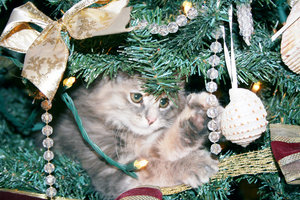 FUZZY IN THE TREE 1: CURIOUS KITTEN, ORPHANED AT 2-3 WEEKS BY AND AUTO, AND BROUGHT HERE