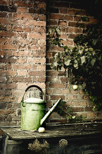 Old Watering Can: Old watering can in an orchard.