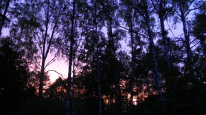 Belarusian Sunset: The sun setting in the forest in Belarus, July 2010.