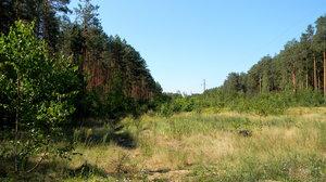 Belarusian Forest