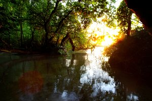 Lake: The shore of a lake; very mangrove looking in the sunset. The picture is blended from two exposures.