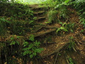 nature stairs