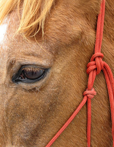 blink of an eye: close up of horse's face and eye