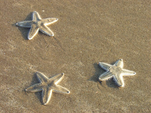 starfish 2