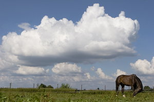 landscape: landscape with clouds and horse