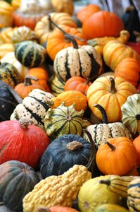 Pumkins, squashes & gourds 2