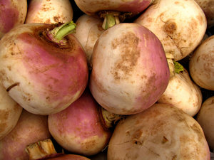 turnip purple
