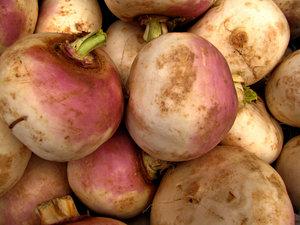 turnip purple