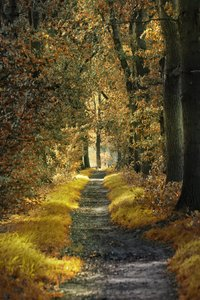 Forest path: fall path in forest