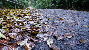 Fallen Leaves 3